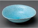 トルコカイラギ7.0鉢